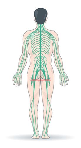 Von Knochengerüst und Nervensystem...